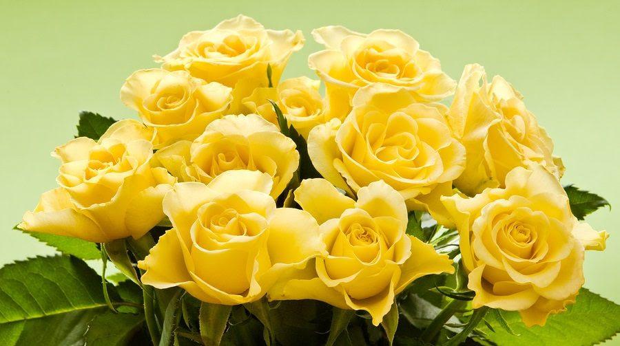 Rosas Amarillas Hd Imágenes Y Fotos