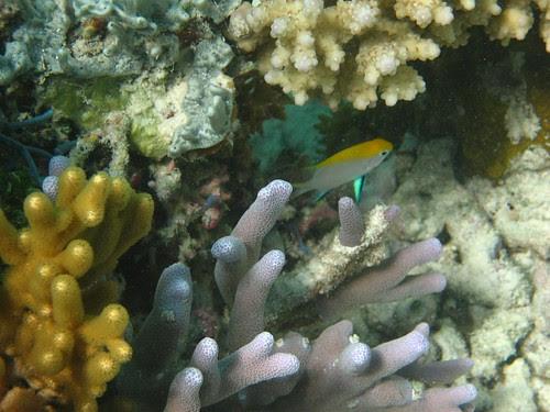 Ashmore reef 1