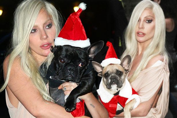 Lady Gaga carries her dogs Miss Asia and Koji dressed up as Santa's as they are leaving 'Billboard Awards' at Cipriani in New York City