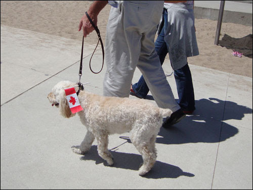Canada Day pooch, Harbourfront, Canada Day 2010