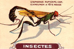 insecte 16