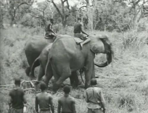 Elephant%20Capture-14 by bucklesw1