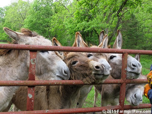 The Daily Donkey 100