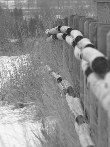 Feb2012 Calgary Flickrmeet #3