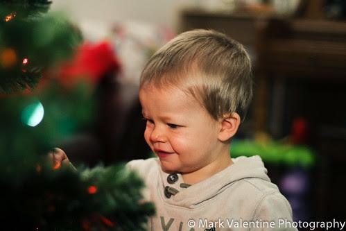Eli Christmas Tree (1 of 1)