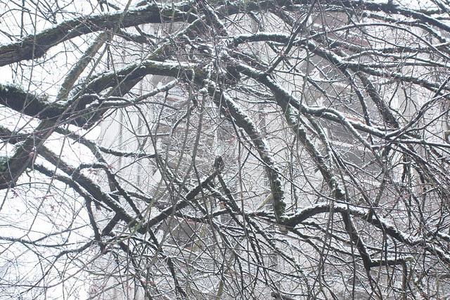 snow, february 2011