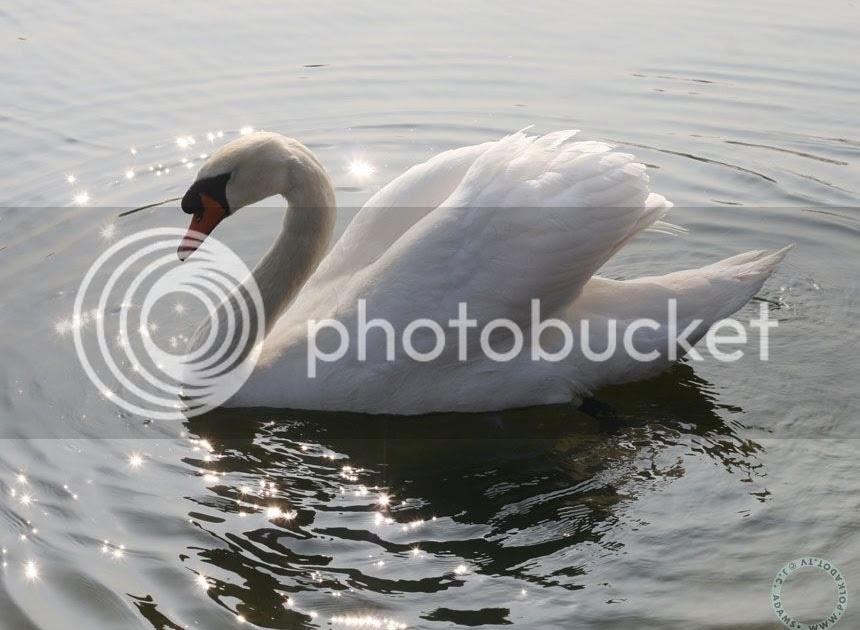 roadtrip23.com: aka streetstyle london : white swan