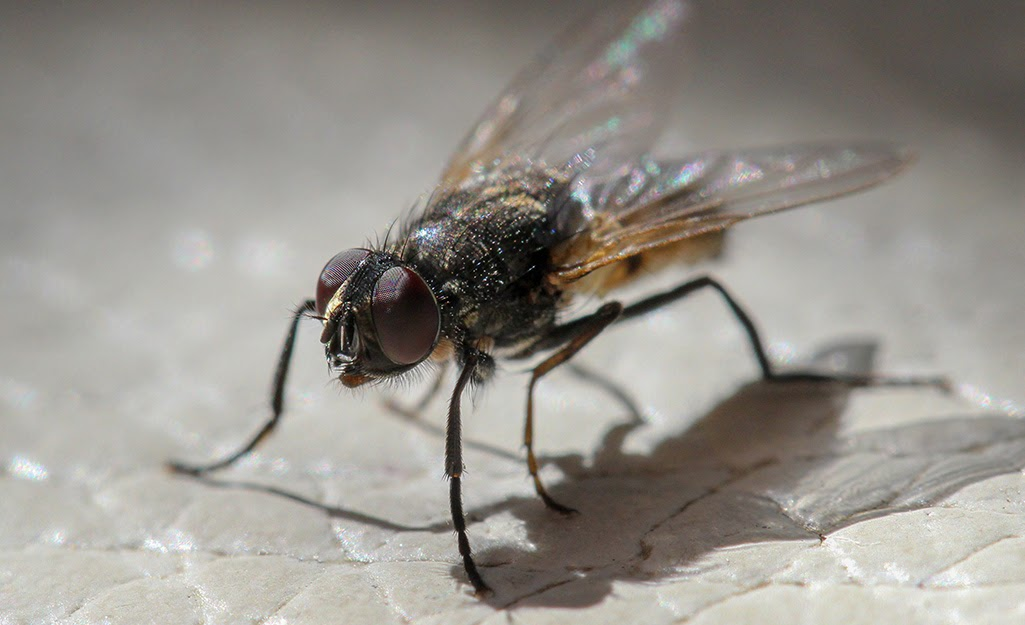 15+ How Do You Get Rid Of Flies In The Backyard Background ...