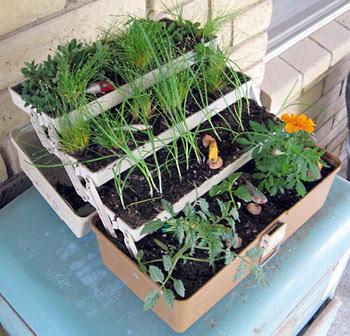 Caixa de ferramentas vira vaso múltiplo pra plantas