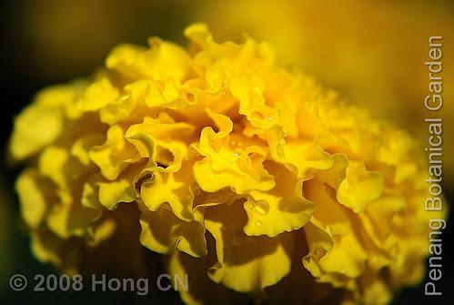 botanic_garden17