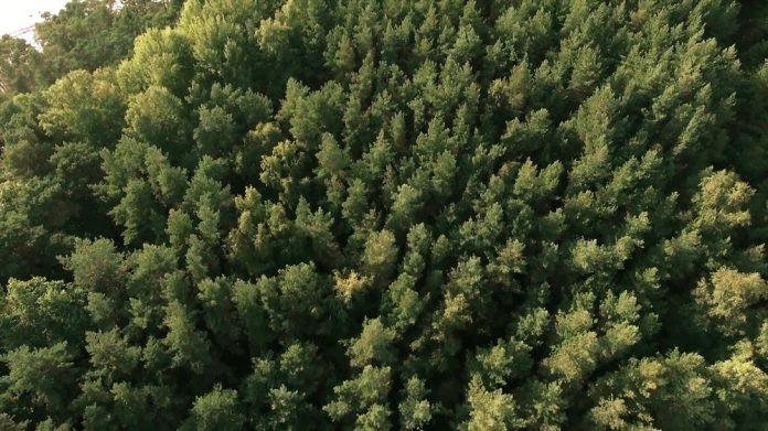 Βιοκαύσιμα δεύτερης γενιάς από δασικά φυτά και αγροτικά υπολείμματα