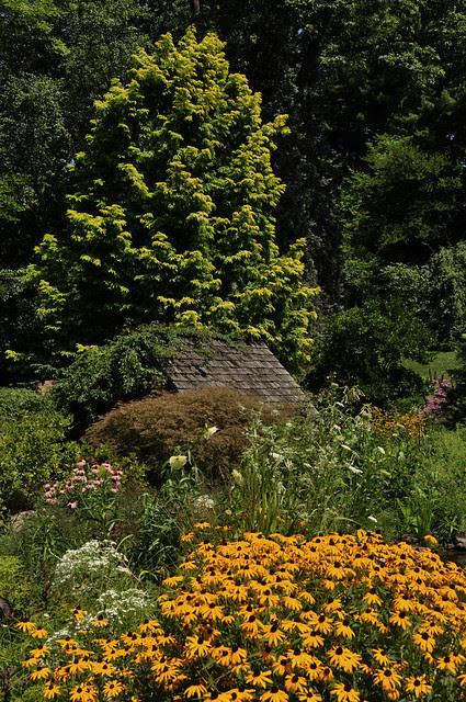 Pond Garden (5)