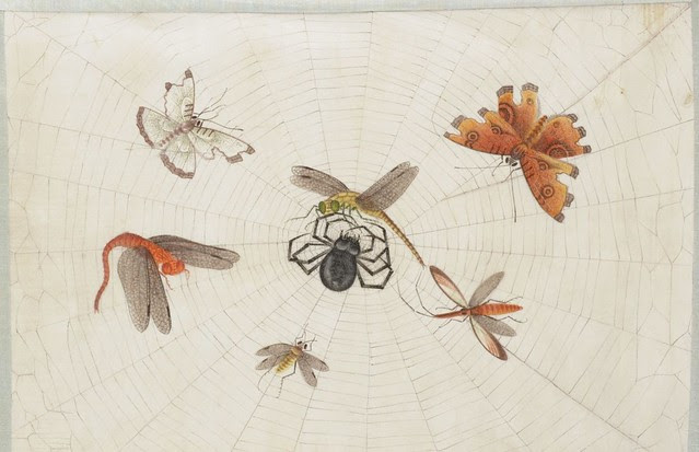insect sketches in chinese album 1900s