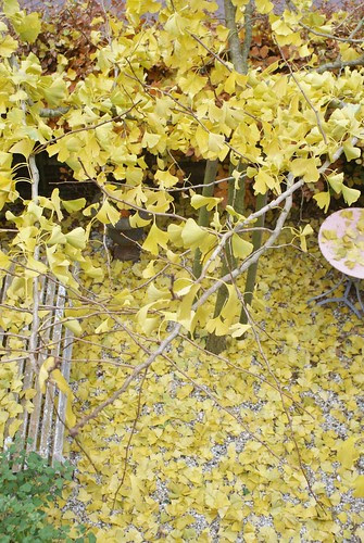 autumn atmosphere by wood & wool stool