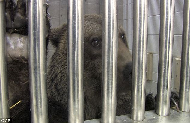 We Feel The Pain For Animals Why Were Anyone Is Allowed -7550