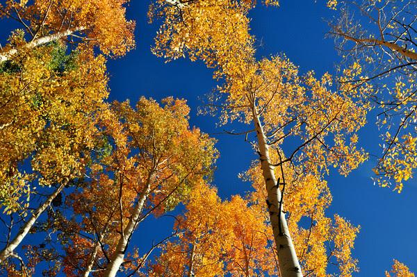 Autumn Color on Molas Pass