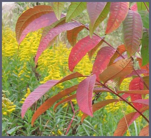 42 Takitani autumn colors