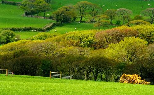 North Cornwall_Z14607