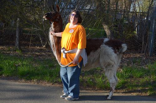Walking the Llama