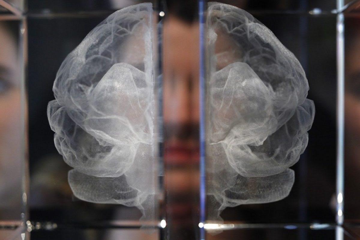 EMPath: Как бедность меняет мозг