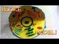 Hücre Modeli Nasıl Yapılır ? (Video) Hücre Modeli Örnekleri
