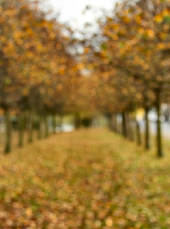 Avenue of trees defocussed