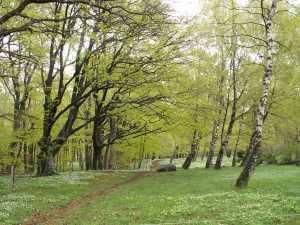 Våren är kommen till Fårhagen
