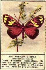 papillon 316