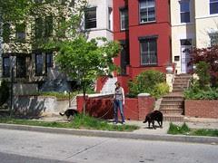 Dog walker, Columbia Heights