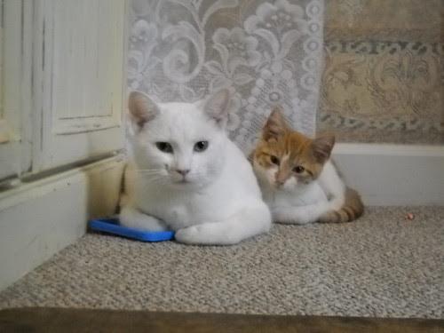Marshmallow and Apollo