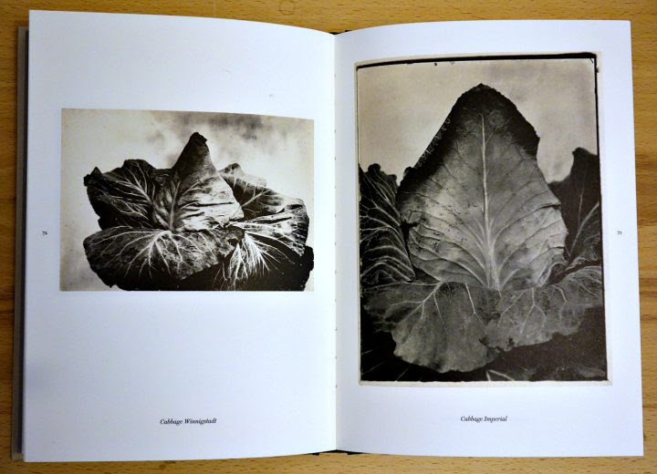 Pages from 'The Plant Kingdoms of Charles Jones' (photo of the book for Hyperallergic)
