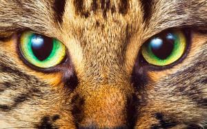 Los ojos de los gatos
