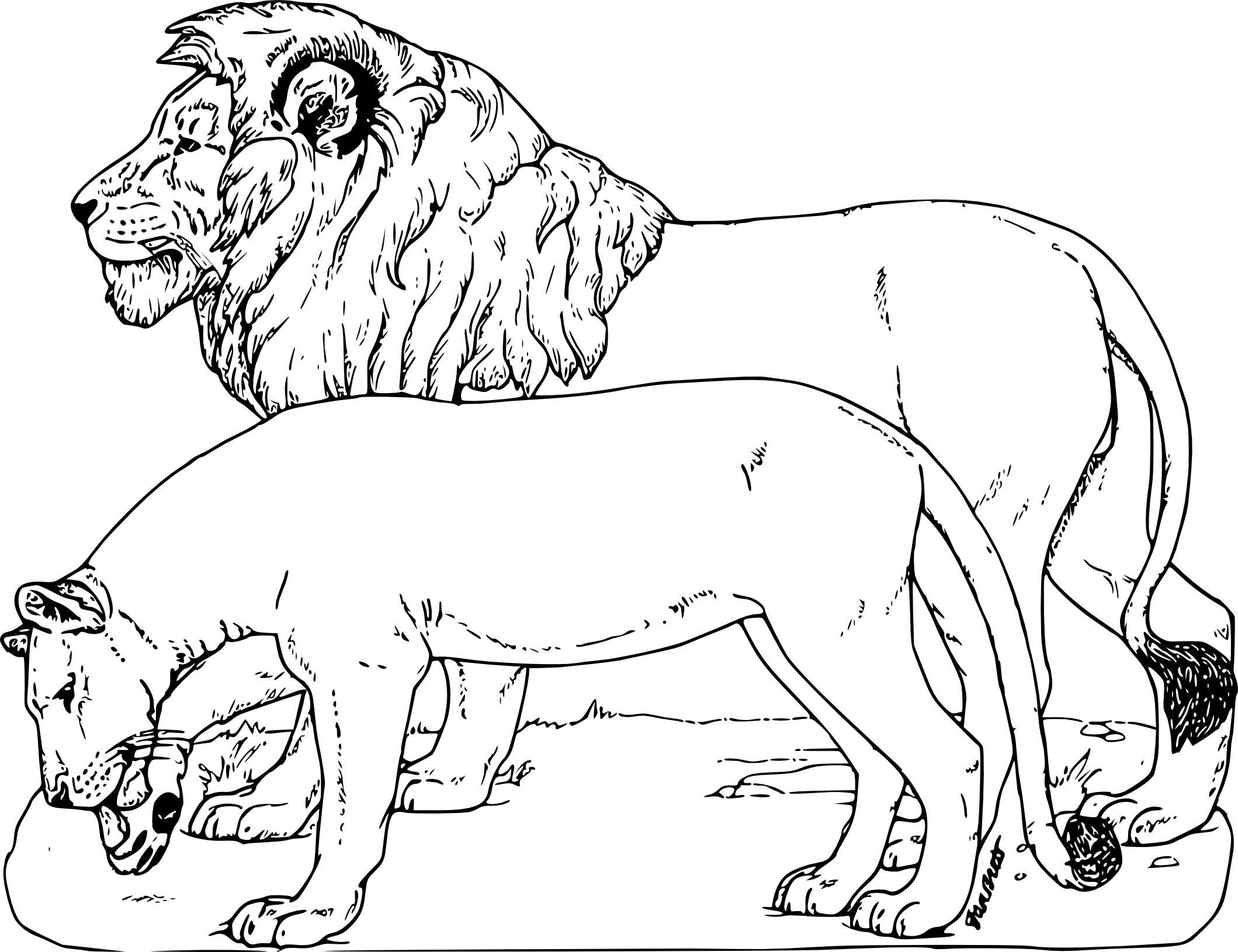 coloriageanimauxsauvageslion