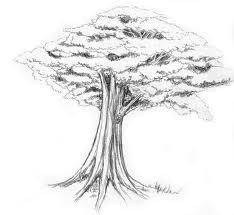 Kiki thought Mengenai Menggambar pohon  dalam psikotes