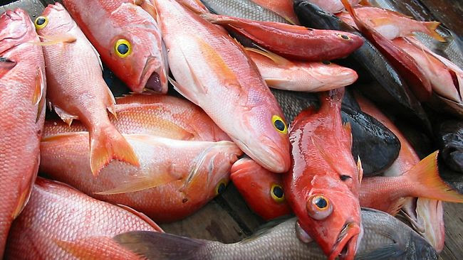 Australian Sustainable Seafood guide fish