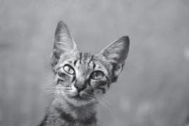 Curious Cat.