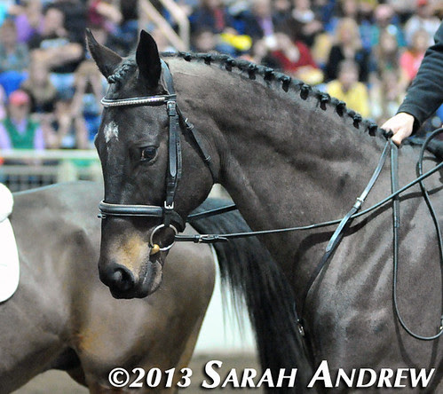 Declan's Moon at the PA Horse World Expo