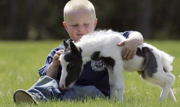 Un pequeño caballo con un lindo bebé