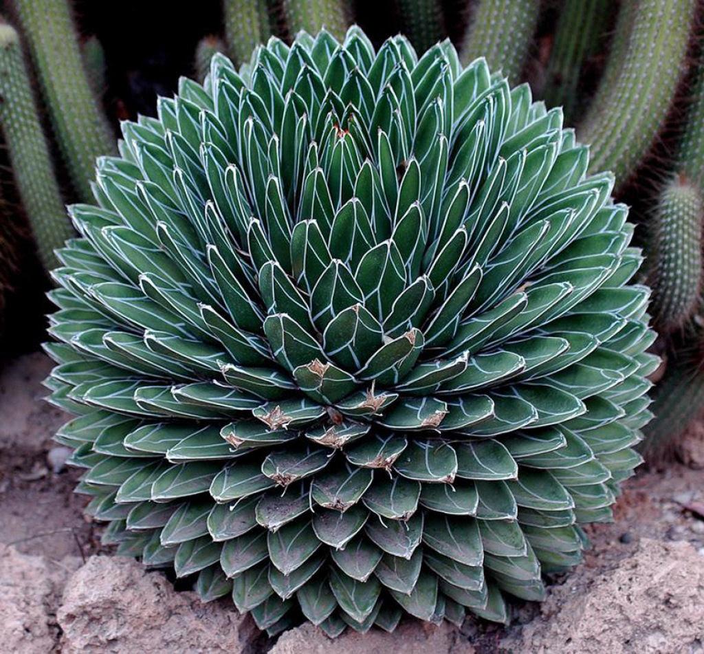 25 Fotografias de plantas para os amantes da matemática 24
