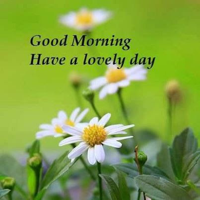 Good Morning Have A Lovely Day Nature Quote Quotespicturescom