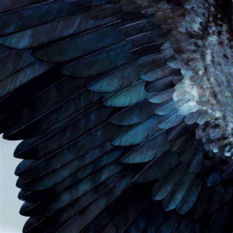 feathers  tumblr