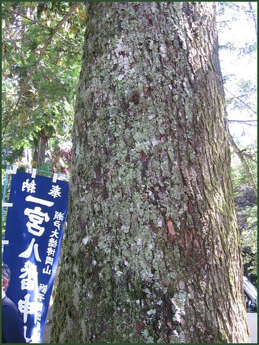 06 the pine stem