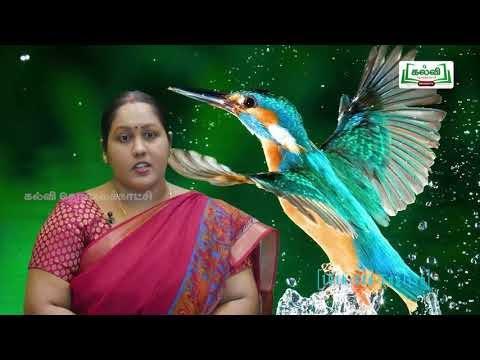 Class 10 English Unit 1 Thadaiyum Vidaiyum Prose His First Flight Poem Life Kavi TV