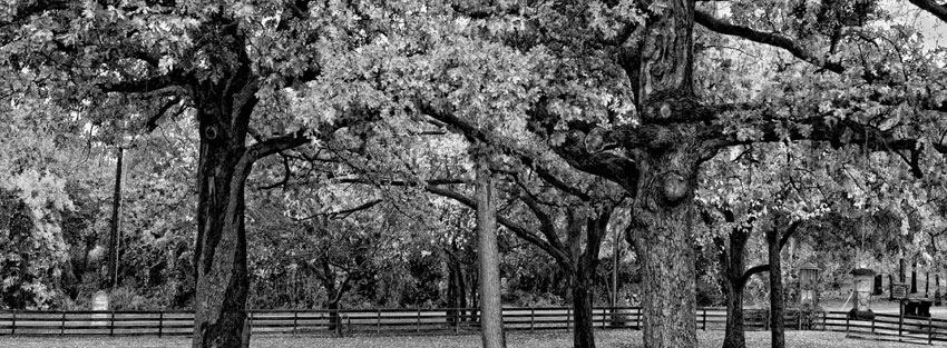 Photo De Couverture Noir Et Blanc Photos De Nature