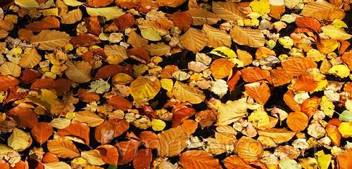 Fallen leaves... by VRfoto