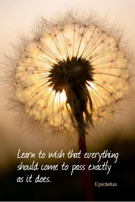 Learn To Wish That Everything Should Come To Pass Exactly As It