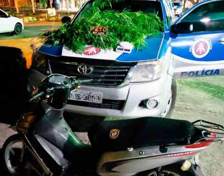 Os 12 pés de maconha e a motocicleta roubada foram apreendidos no bairro Aviário, em Feira de Santana - Foto: Reprodução | Site Acorda Cidade
