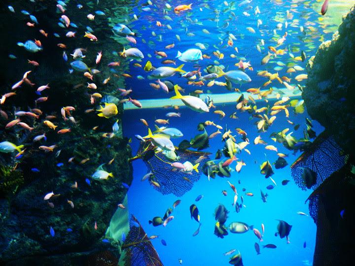 colourful fishes S.E.A. Aquarium world's largest aquarium