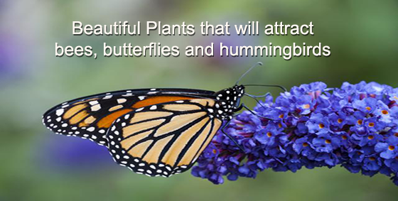 47 Plants that Attract Bees, Butterflies and Hummingbirds