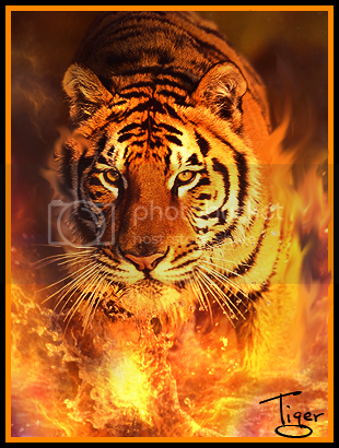 Tiger Witch Pictures, Images and Photos